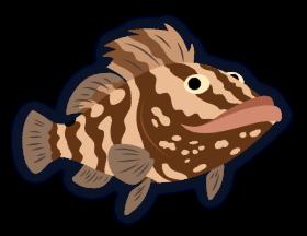 Disco the grouper